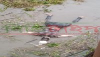 ভোলার চরফ্যাশন উপজেলার বেতুয়ার পাড় থেকে অজ্ঞাত ব্যক্তির লাশ উদ্ধার
