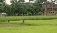 কংক্রিটের থাবায় নিভে যাচ্ছে ফসলী জমির প্রান